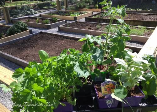 Vegetables for the kitchen garden