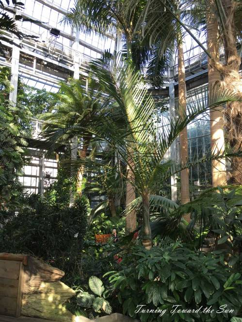 Walking through the Conservatory at the United States Botanical Garden in Washington, D.C., is like visiting a tropical jungle.