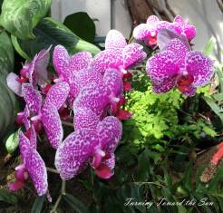 Orchids were blooming when I visited, and their rich colors caught my eye.