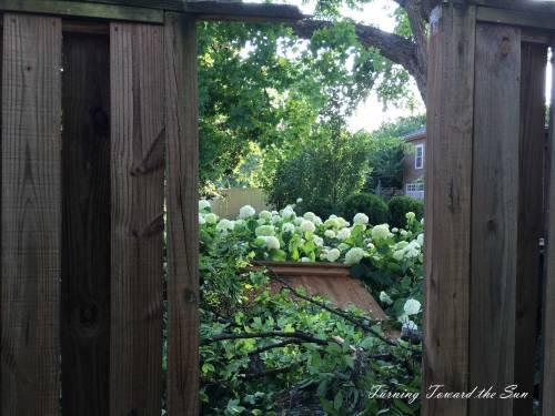Tree-fence